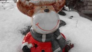 kerst-bull